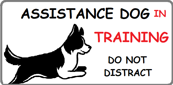 Assistance Dog in training badge with a Border collie and says do not distract