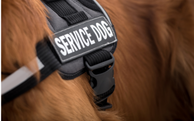 The unlimited potential of Service Dogs