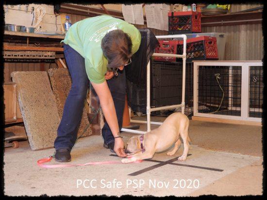 PCC Safe PSP Nov 2020 (14)